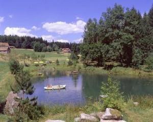 See Steinwald